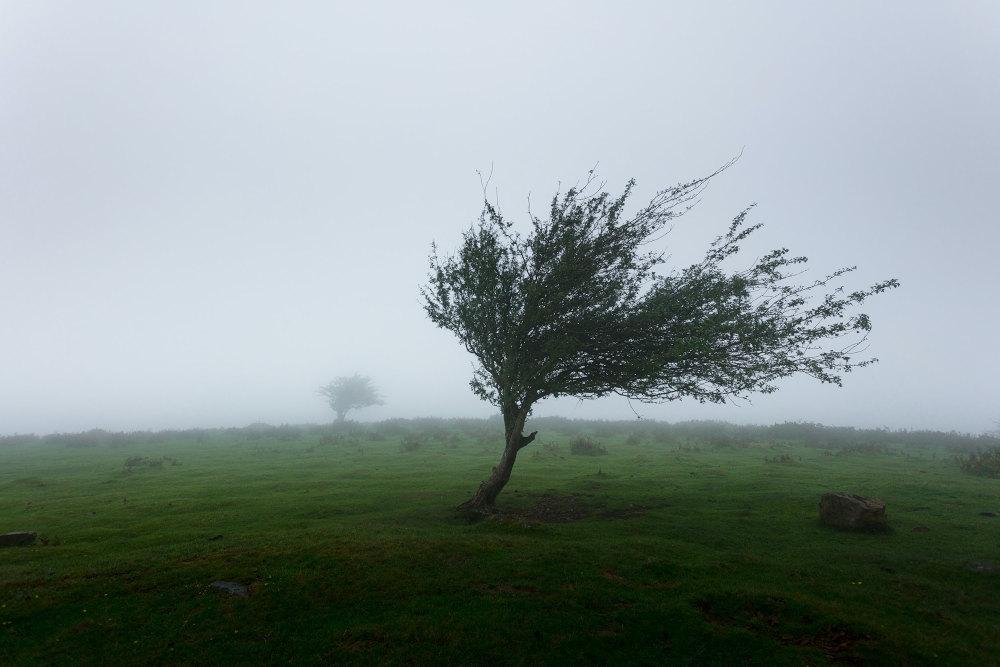 Tree blowing in wind