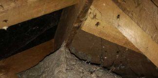 Large wasp nest in attic