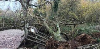 """HEARTBREAKING images show how the iconic bridge from the Winnie-the-Pooh books has been """"closed indefinitely"""" after being demolished by a fallen tree - Nature News Scotland/UK"""