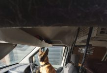 Dog left in van
