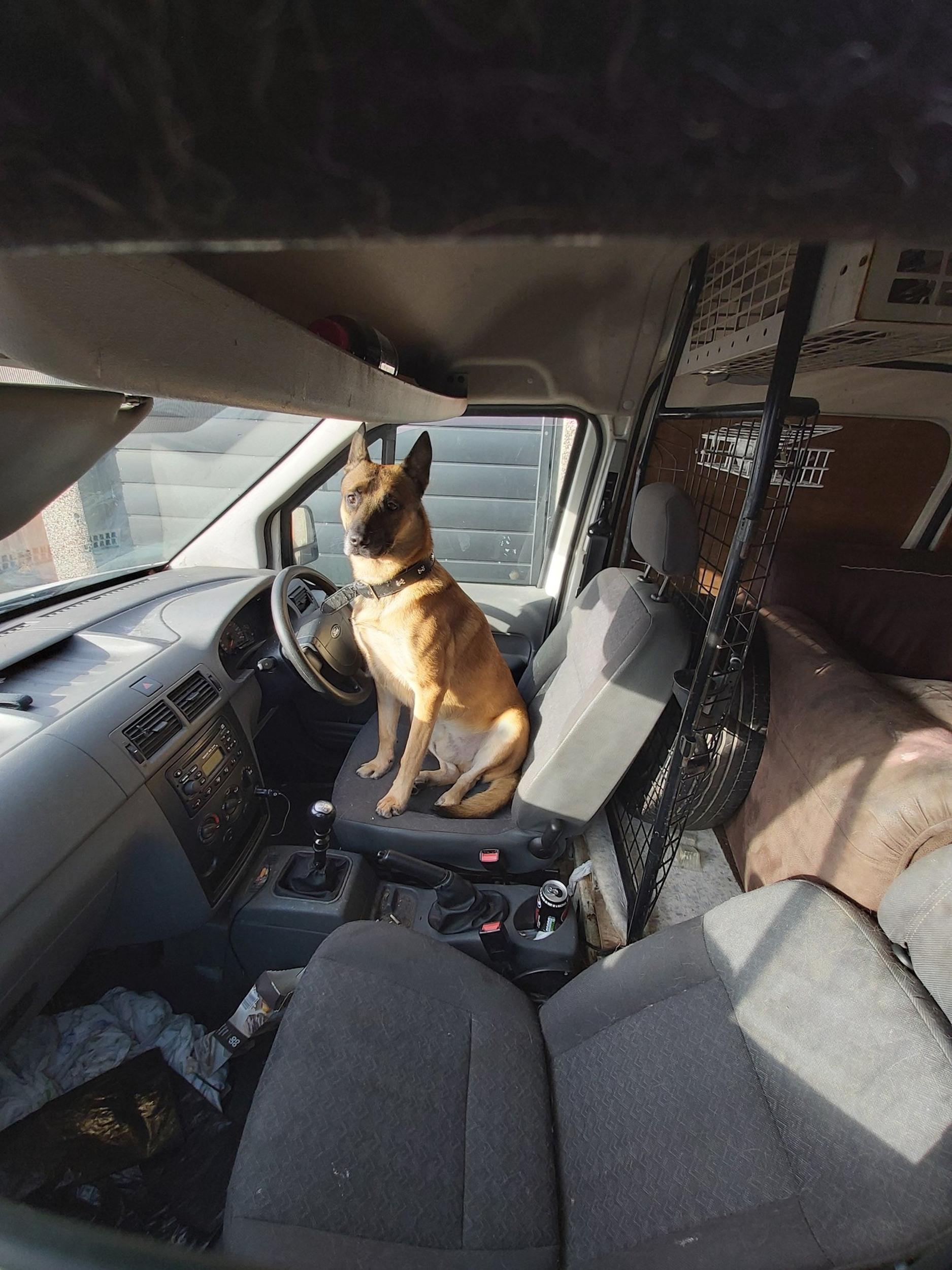 Dog left in van