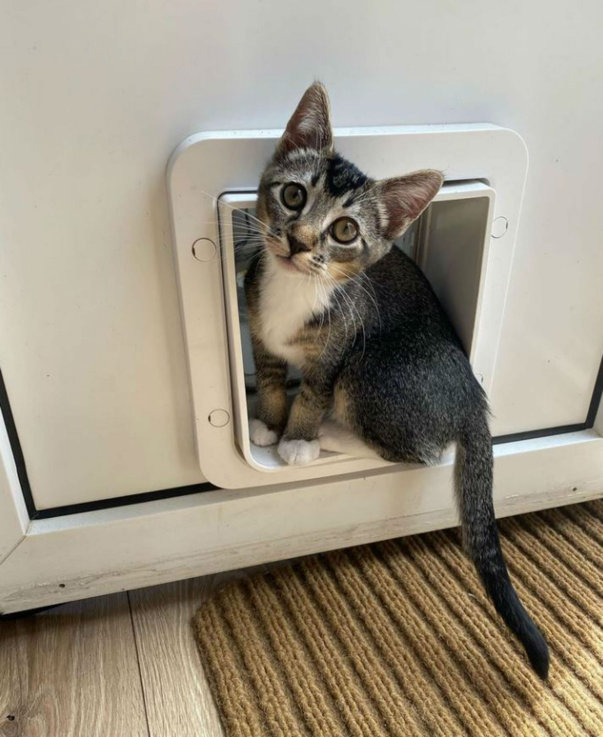 A SNEAKY kitten has gone viral after being filmed creeping back home with a stolen bag of treats in its mouth - Viral Video News