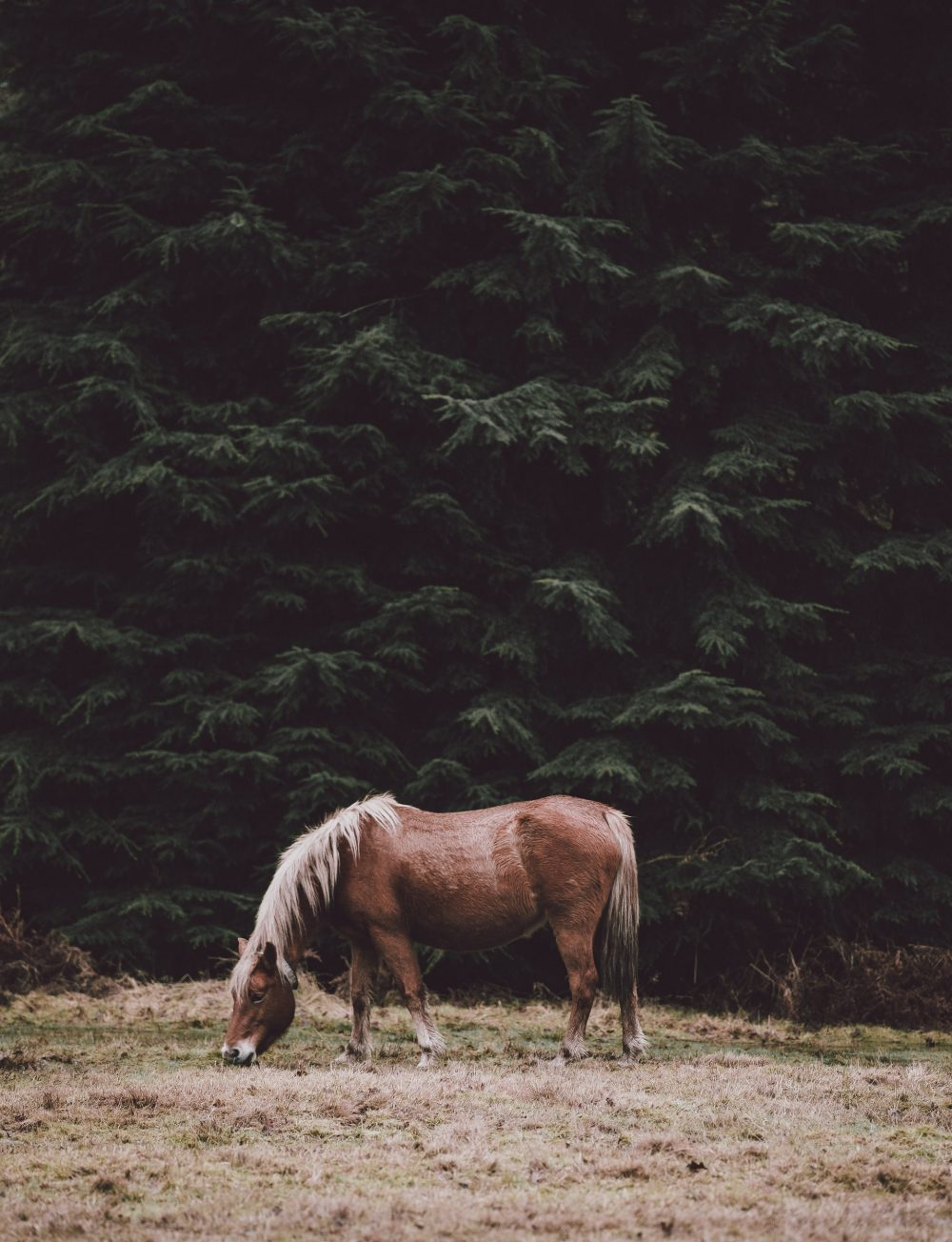A horse with trees in the background