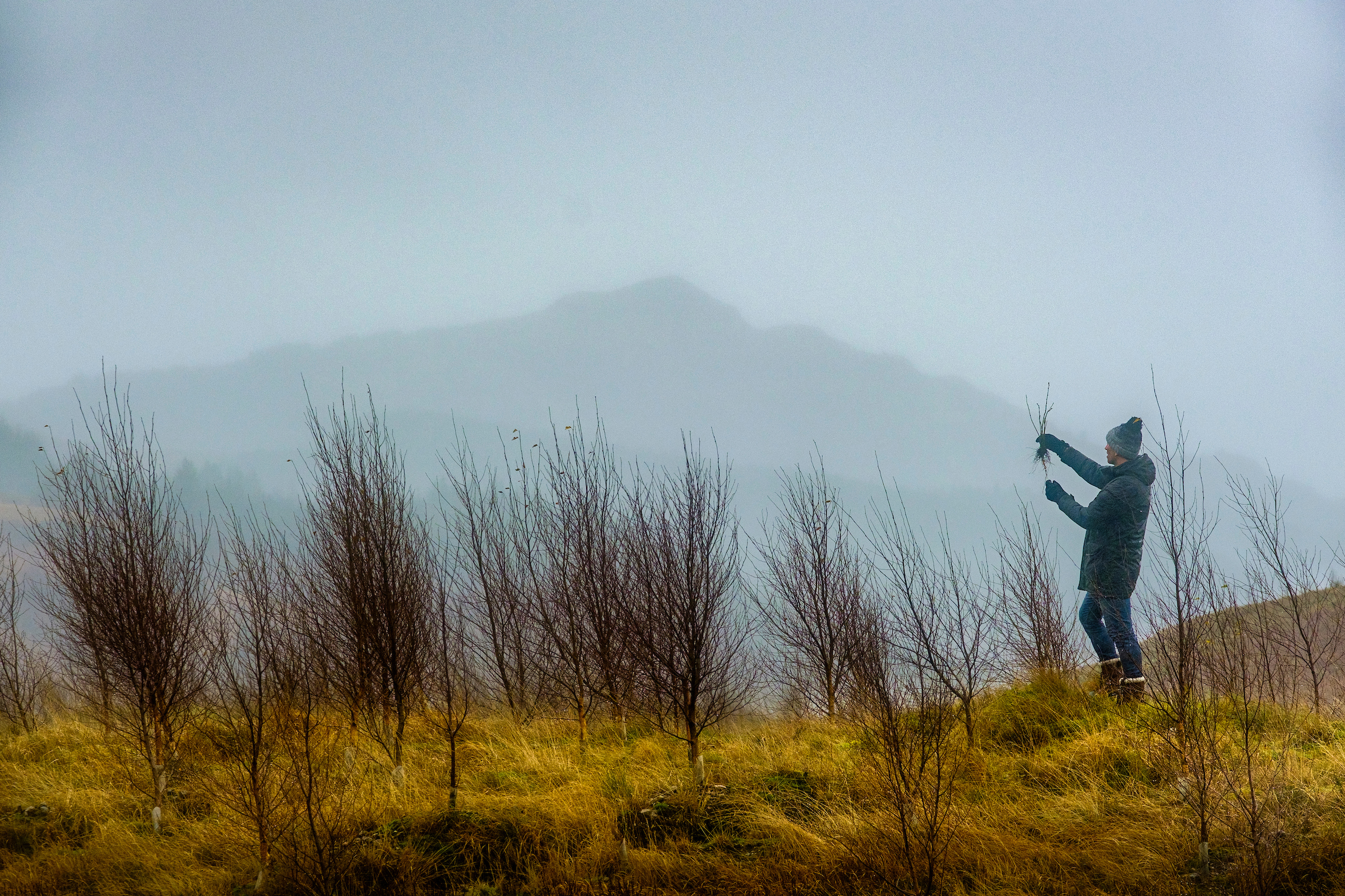 Johnnie Walker tree planting - Business News Scotland