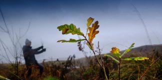 Johnnie Walker saplings - Business News Scotland
