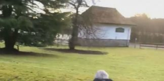 Grandfather jumps stream for £10 bet - Viral News Scotland