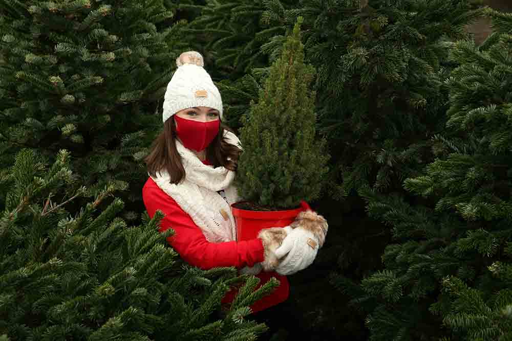 Dobbies bring forward Christmas tree celebrations due to Brits wanting early festive celebrations - Business News