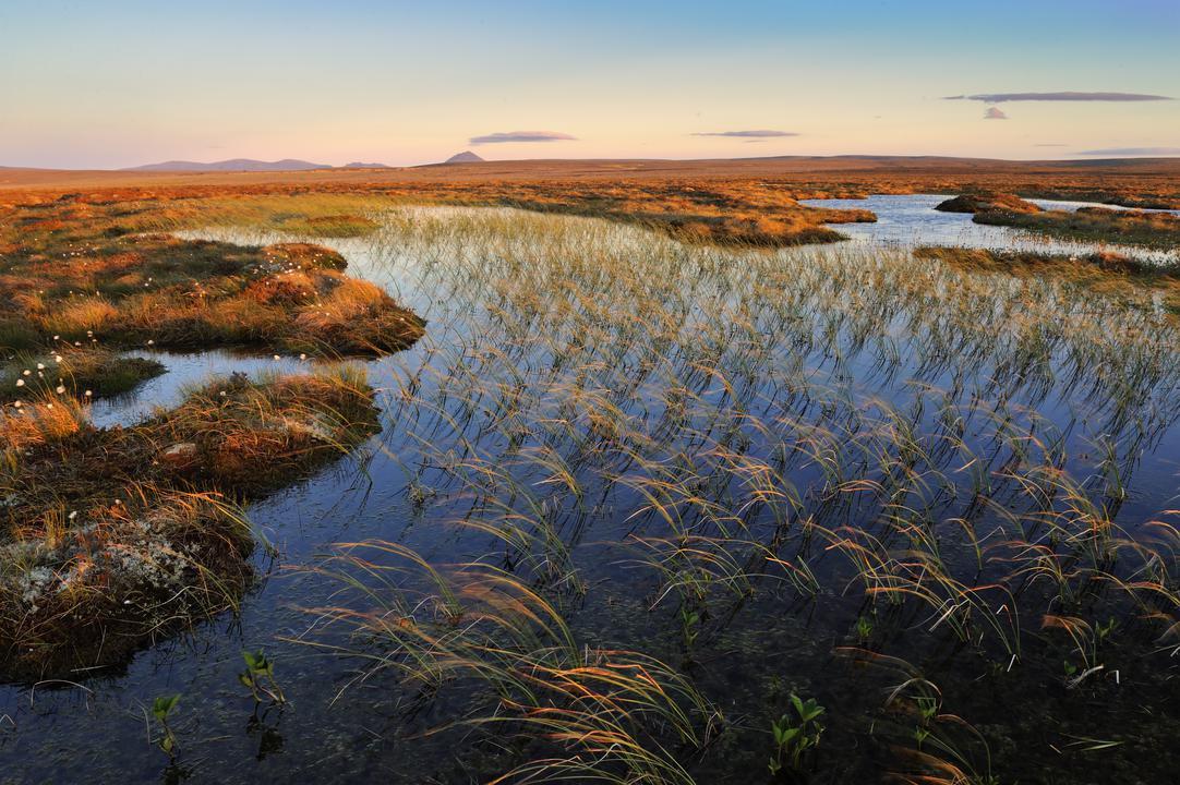 NatureScot report on nature loss - Nature News Scotland
