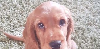 Dog owner virtually reunited with dog - Viral News