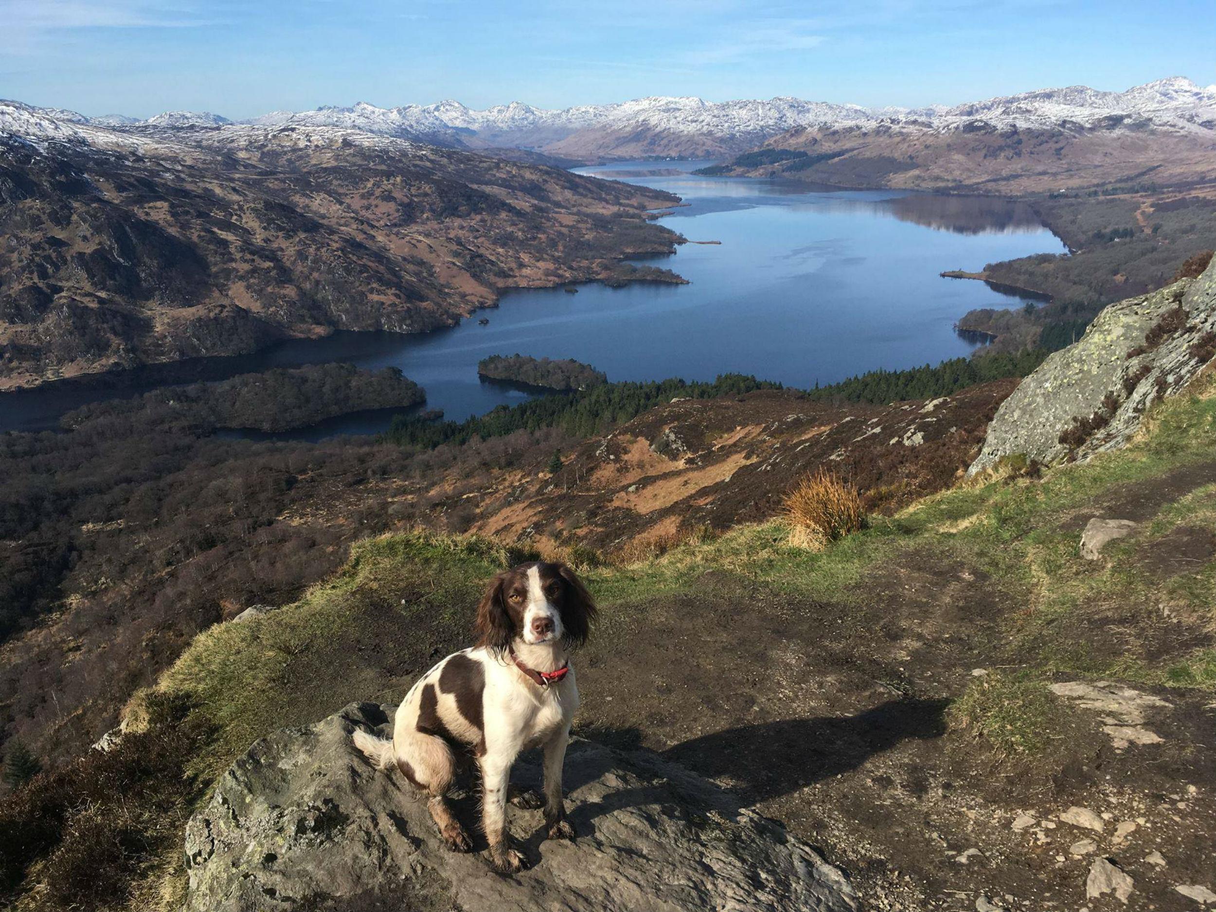 Kizzy the spaniel - Scottish News