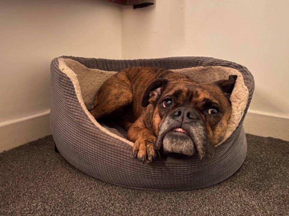 Dog tummy drained after ingestign white paste - Animals News Scotland