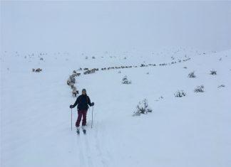 Reindeer follow skiier - Scottish News
