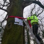 Middle Oak tree in Markeaton Park - Scottish News