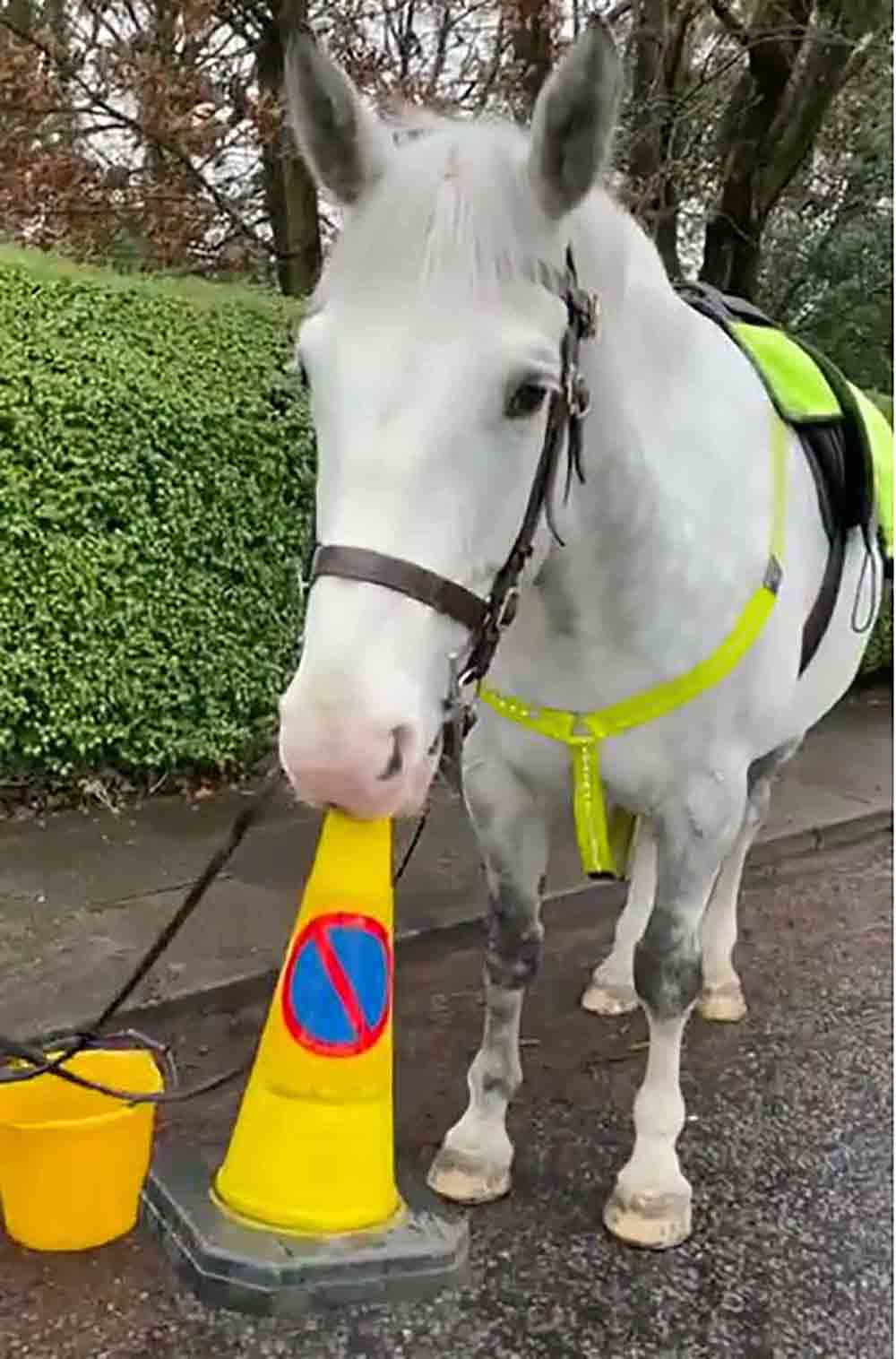 Barnaby the horse refuses to give up traffic cone - Viral Video News UK