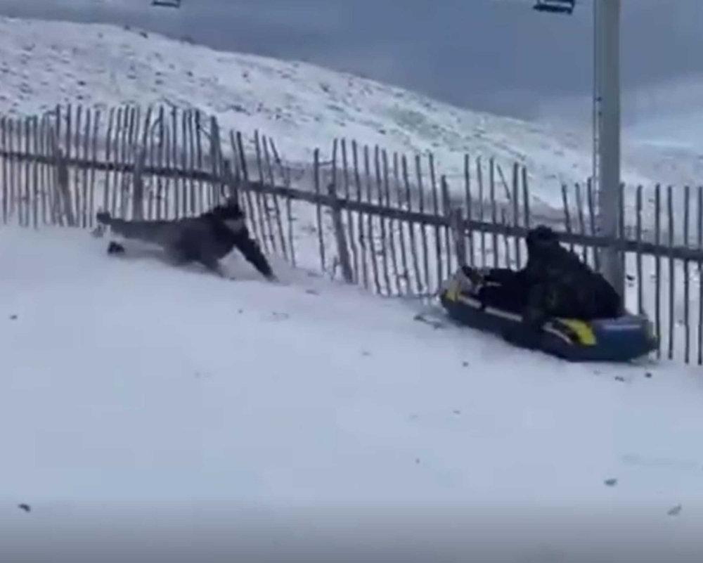 Sledder knocked down by rubber dinghy- Viral News Scotland