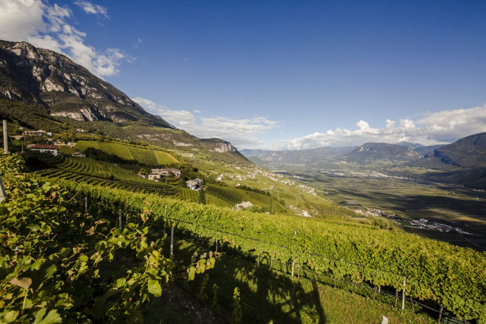Vineyards of Cantina Kurtatsch in the Dolomite Alps in Alto Adige - Food and Drink News Scotland