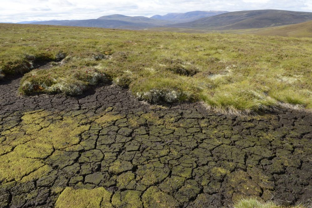 Increased risk of extreme droughts in Scotland over next two decades - Nature News Scotland/UK