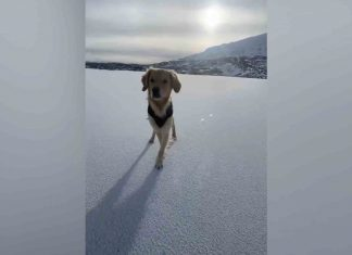 Stunning video shows man ice skating on a frozen Loch Skeen with his adorable dog - Viral Video News Scotland