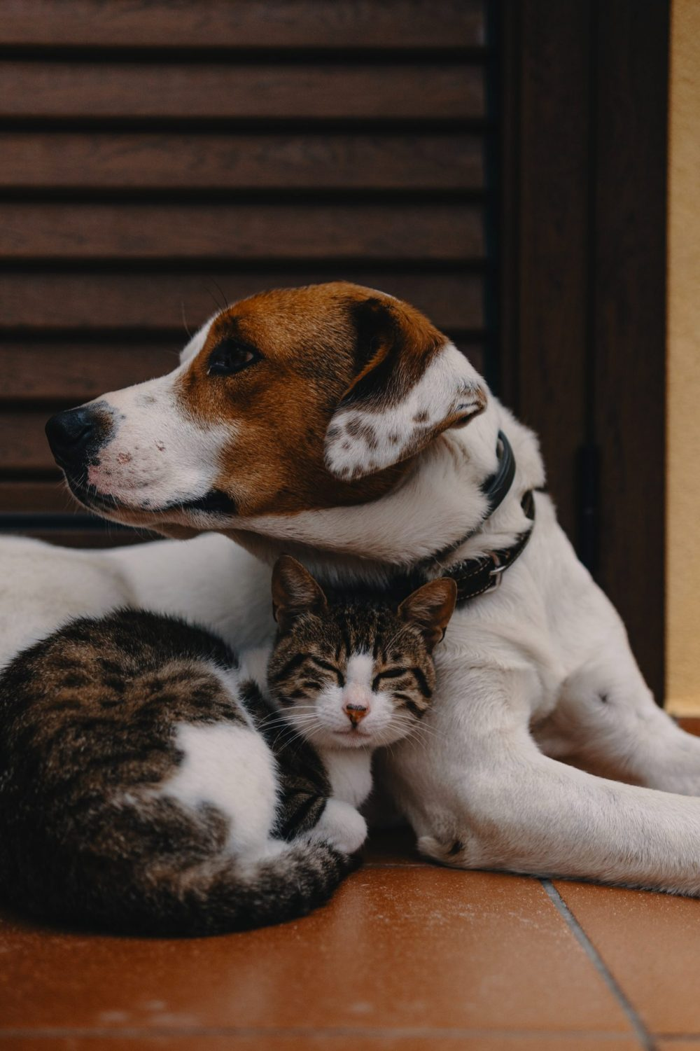 A picture of a dog and cat - Animal News Scotland