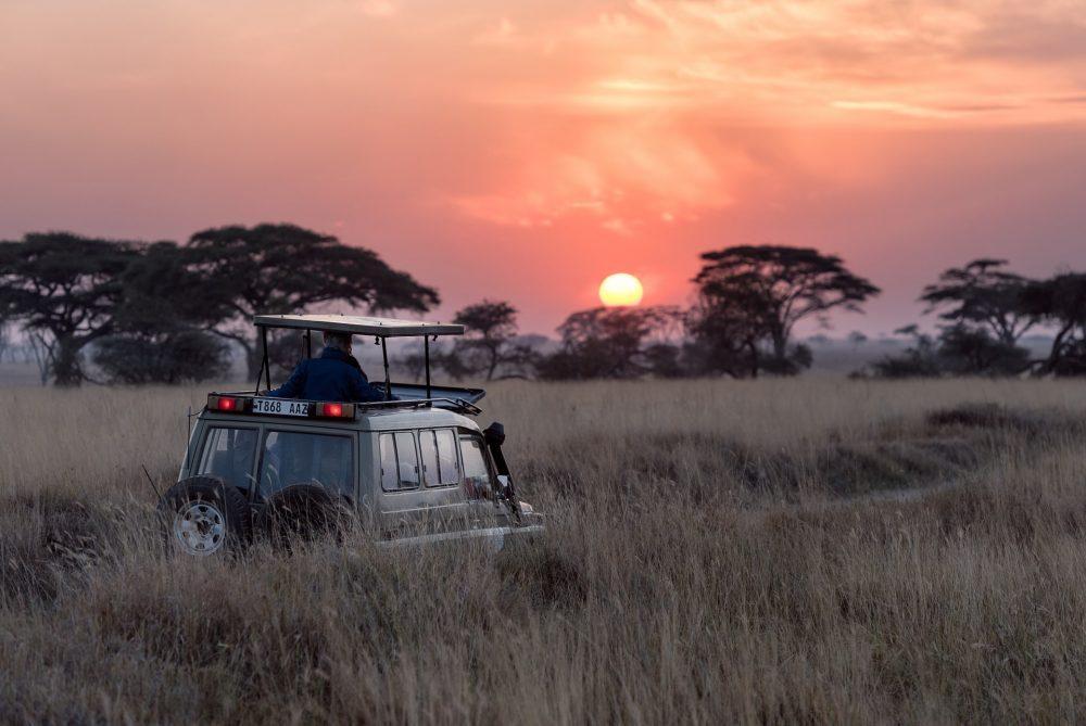 A picture of a safari