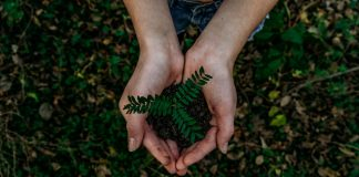 A pair A pair of hands holding a plant - Environment News Scotlandof hands holding a plant - Environment News Scotland