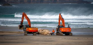 Beached Fin Whale   Scottish News