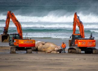 Beached Fin Whale | Scottish News