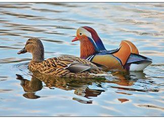 Two love birds | Scottish News