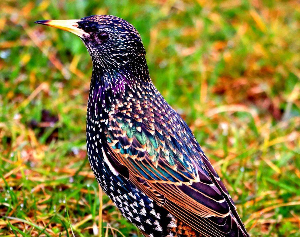 Stunning Startling | Nature News Scotland