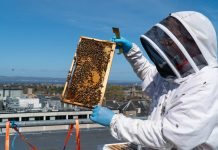 webster honey installed bee hives on the roof at Eden Lock - Food and Drink News Scotland
