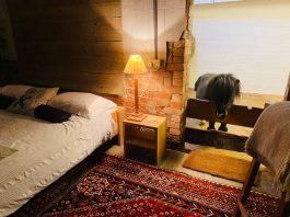 Horse Airbnb | Property News