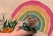 Snoot the Rat   Entertainment News