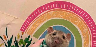 Snoot the Rat | Entertainment News