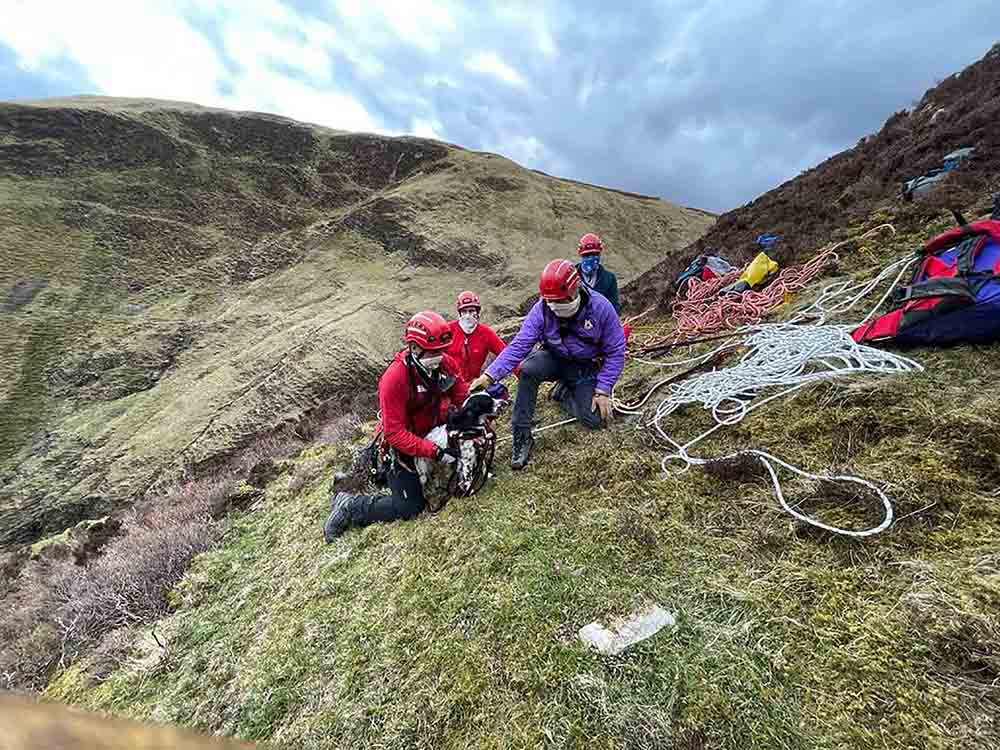 Mountain Rescue Team save springer spaniel puppy Louis who fell down waterfall - Scottish News