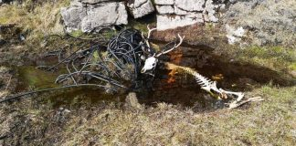 Stag skull tangled in industrial cable | Wildlife News