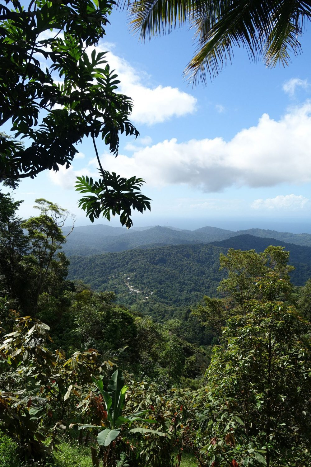 The Northern Range Mountains of Trinidad cocoa trees - Research News Scotland
