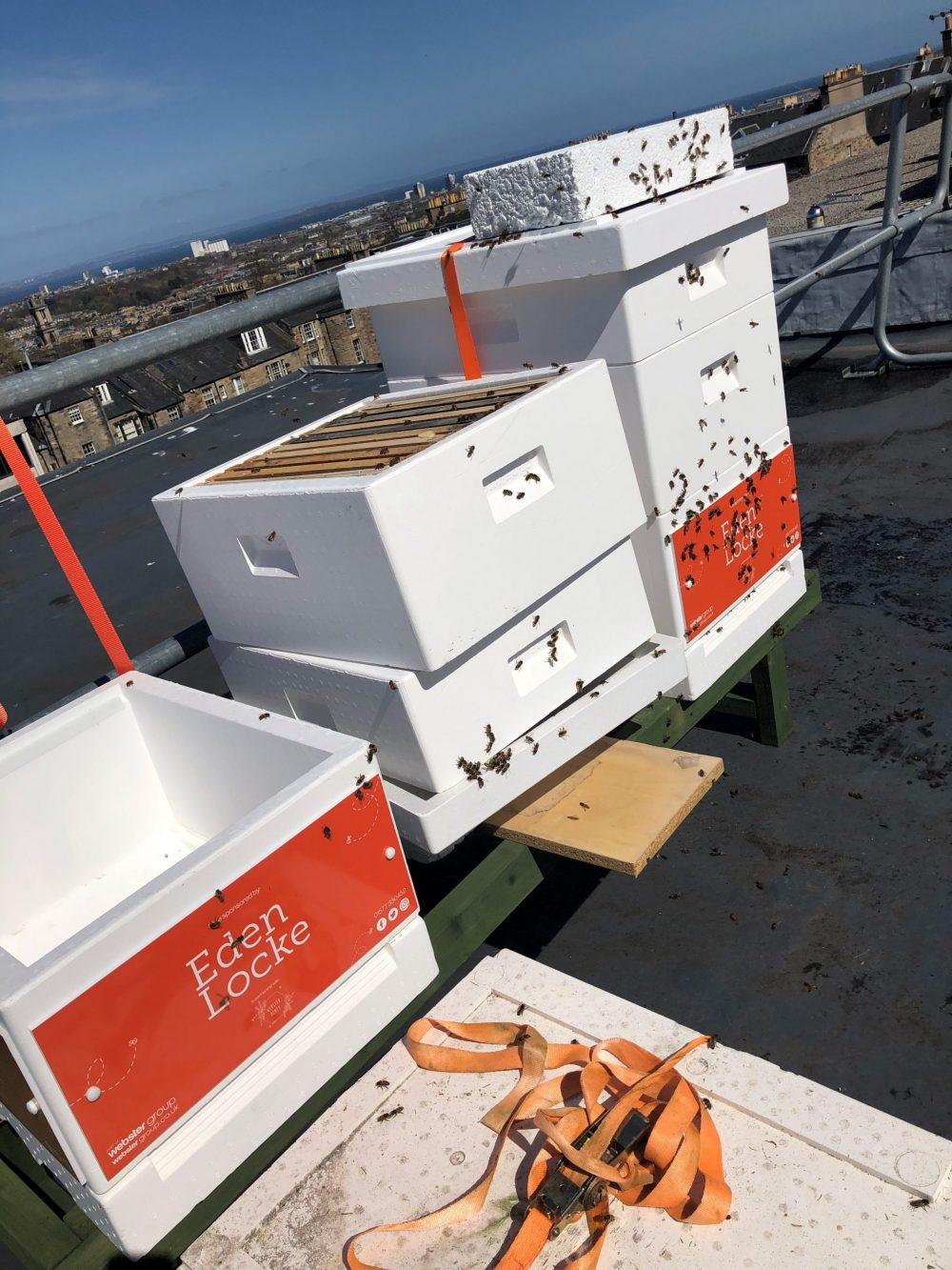 Bees on Eden Lockes roof - Food and Drink News Scotland