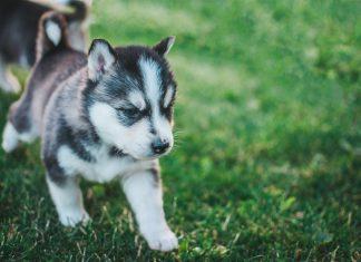 dog for national pet month-Scottish News