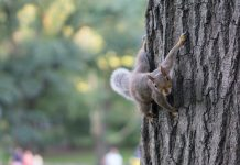 A squirrel on a tree - Animal News Scotland
