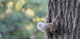A squirrel on a tree - Animal News Scotland