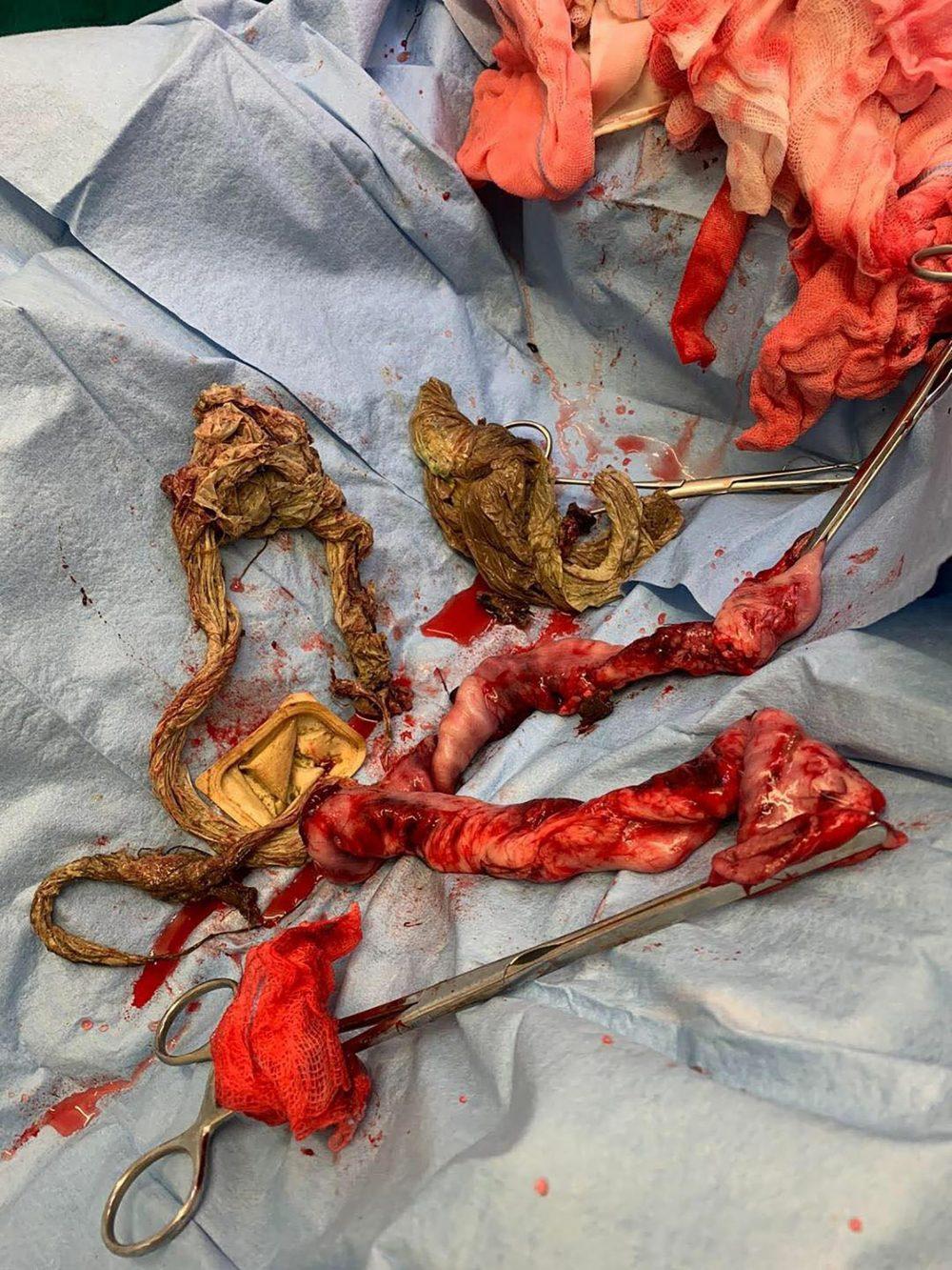 Vets had to remove 18 inches of Milo's intestine - Animal News Scotland