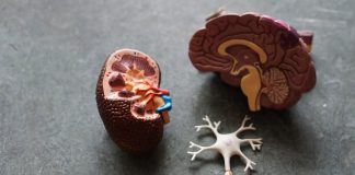 A picture of a brain - Scottish News