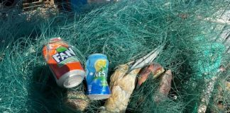 The Dead Gannet Tangled in Green Fishing wire | Scottish Wildlife News