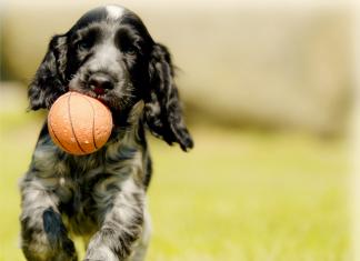 Dog - Viral News