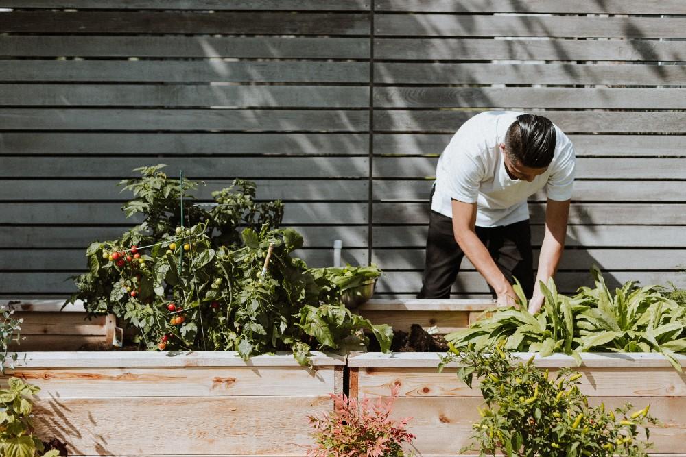 Gardening - Health news Scotland