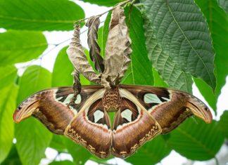 Moth - Nature News Scotland