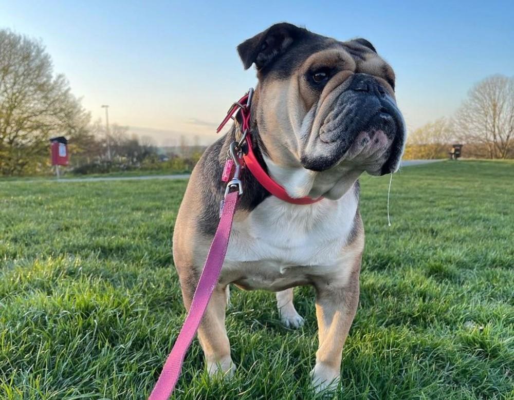 Tootz the dog - Scottish News