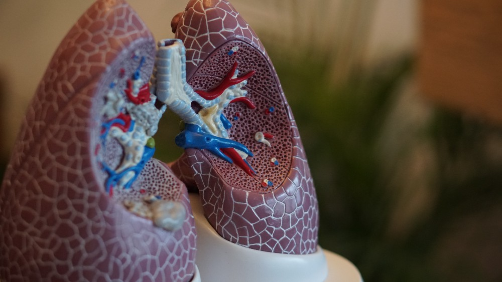 Lungs - Health News Scotland