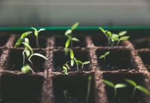 Seedlings - Health News Scotland