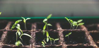 Seedlings - Health News Scotland